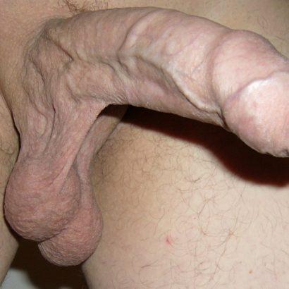 Rasiertes Schwanzbild