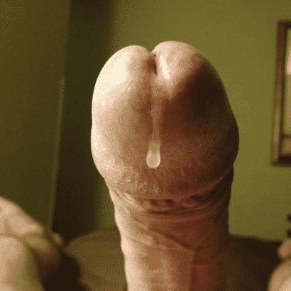Lusttropfen Eichel